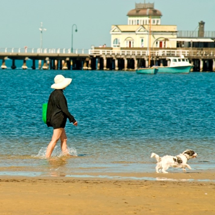 Women wading through the water on St Kilda West dog beach with two dogs off leash and the St Kilda Pier in the background.