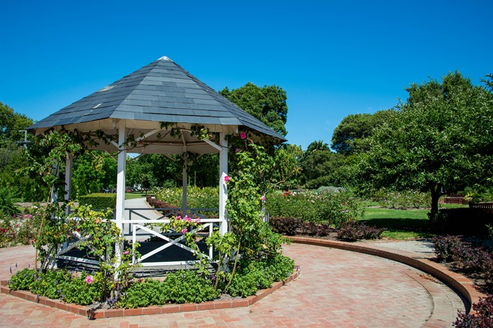 Rotunda covered in pink rose vines in the rose garden at the St Kilda Botanical Gardens